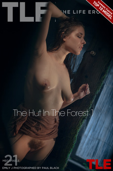 The Hut In The Forest 1